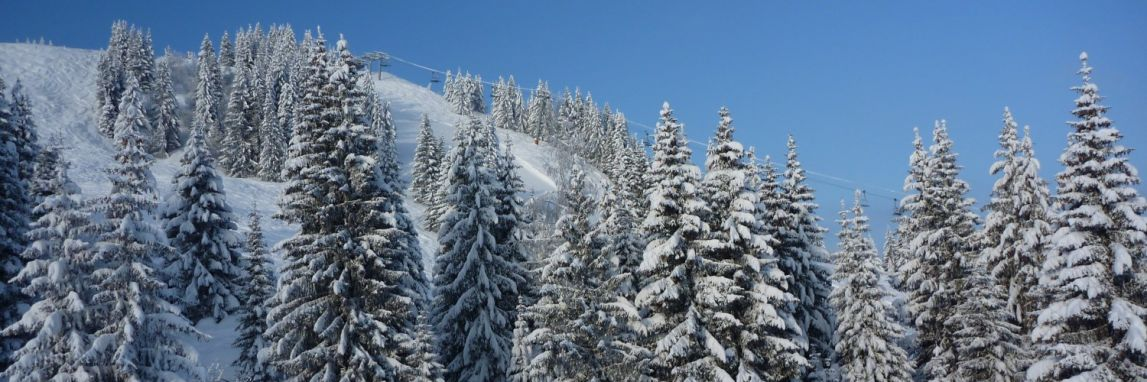 Snow covered trees on the mountaisn ina beautiful place to ski solo