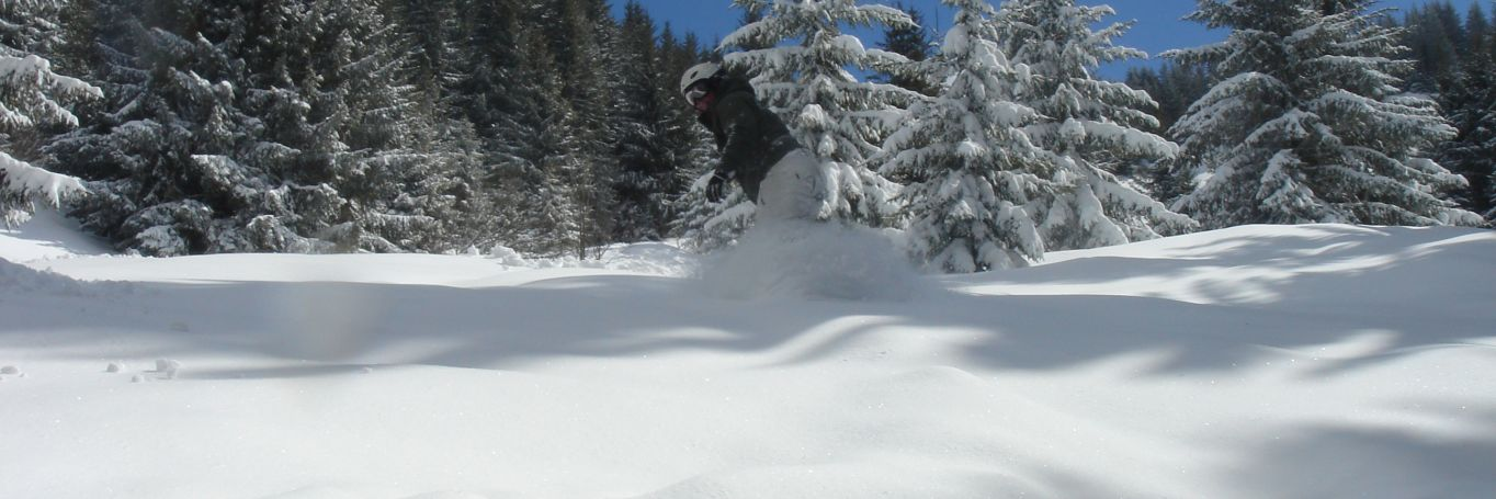 A single snowboarder enjoyign a run among the snow covered trees